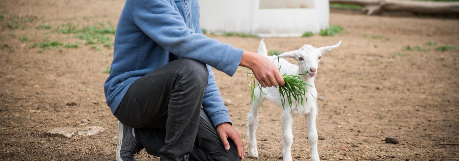 Farm School feeding baby goat