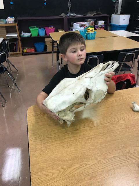 young male student holding a fossil replica