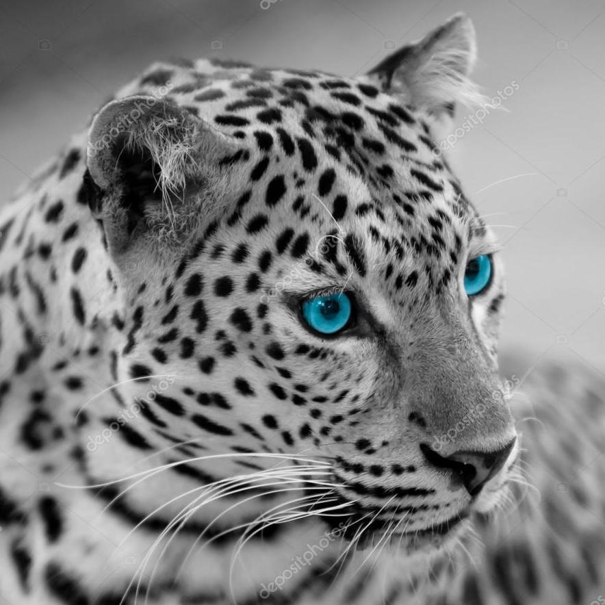 Jason Parker's Profile Photo