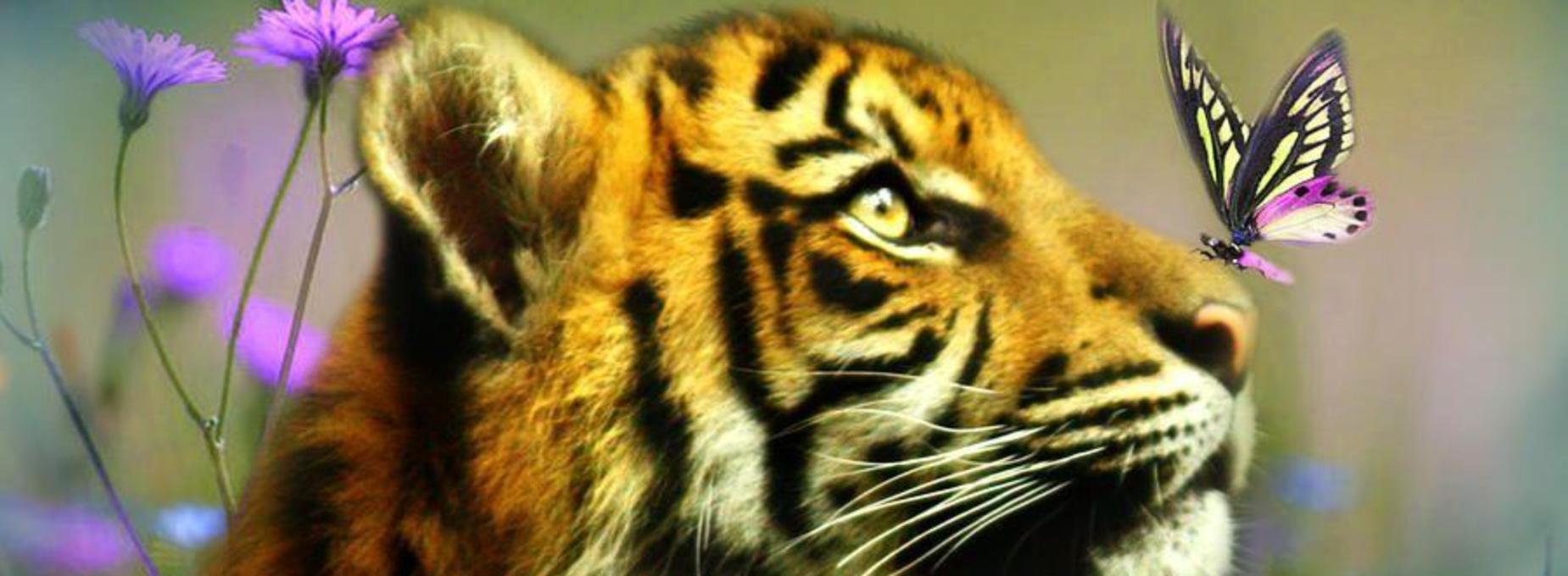 Spring Tiger