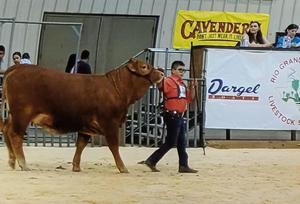 6th Gr. Student wins Reserve Grand Champion