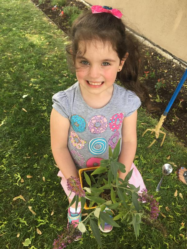 Butterfly Garden Planting for Green Schools Featured Photo