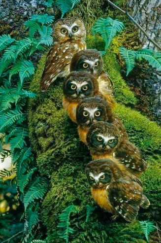 Brood of owls