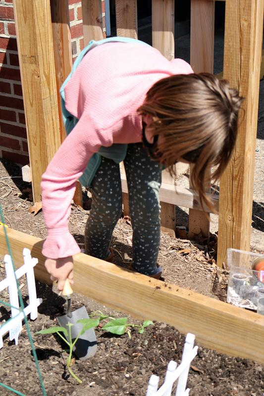 First graders in Alison Schreier's class at Wilson School recently enjoyed transplanting wax bean, cucumber, and watermelon seedlings into newly built plant beds occupying a sunny spot in the school's new learning garden.