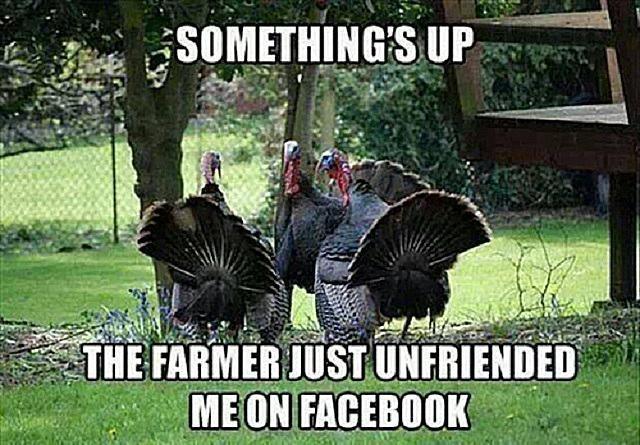 Facebook Funny Turkeys