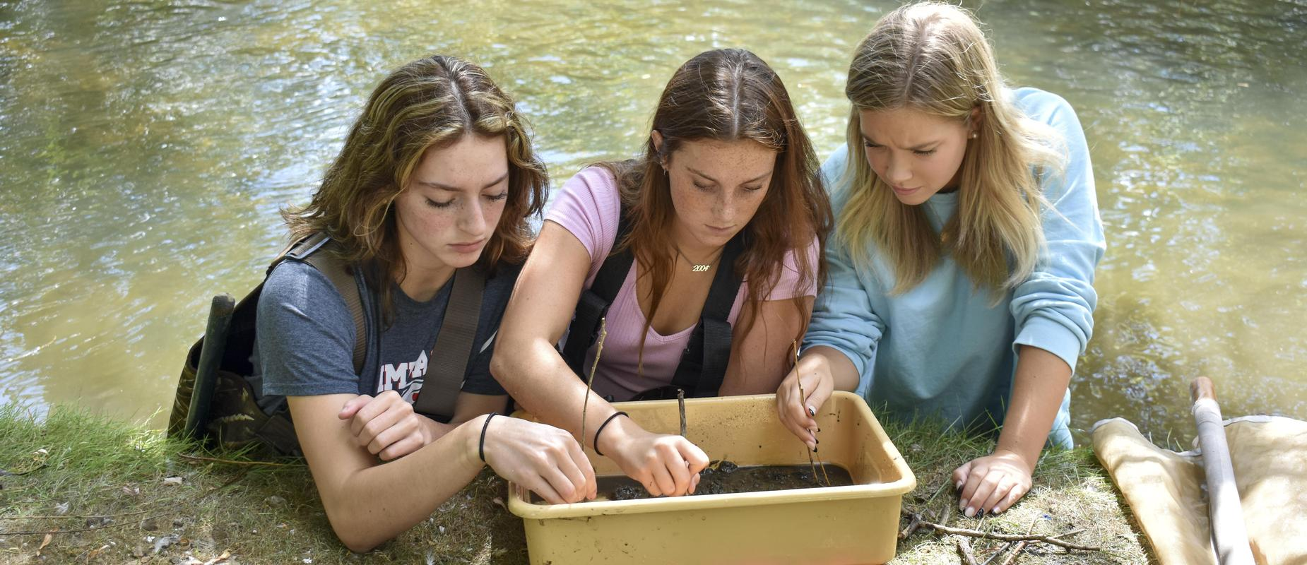 three girls study bugs in creek by examining them in a tray