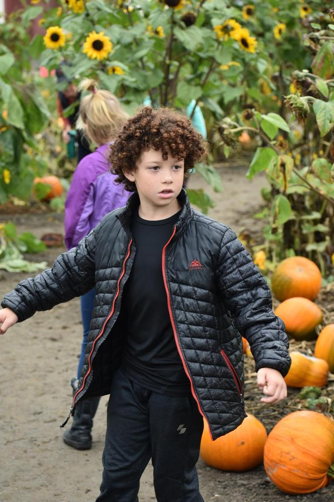 searching for perfect pumpkin