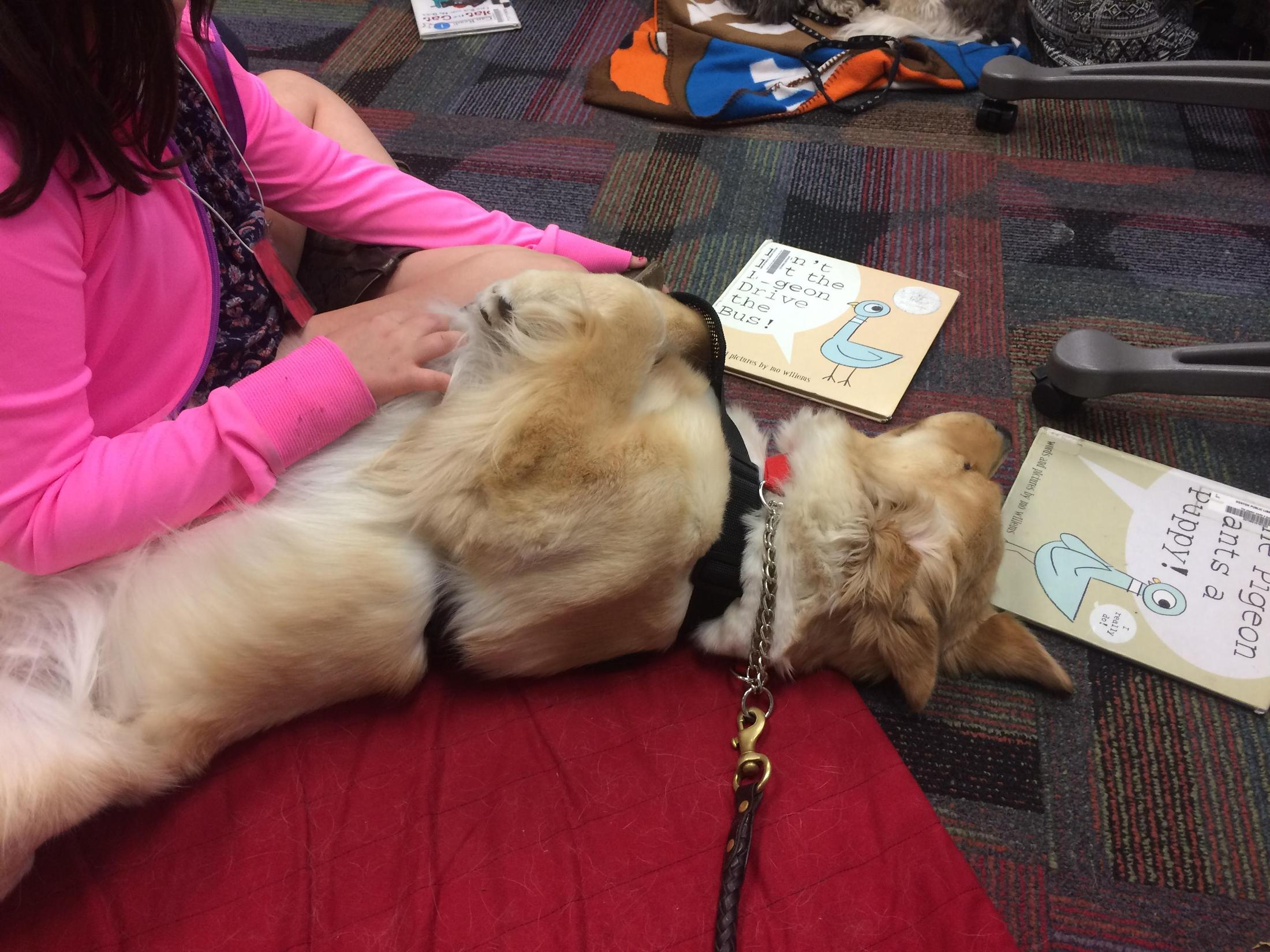 Therapy Dog - Juno – Ball, Michael – Argyle Independent