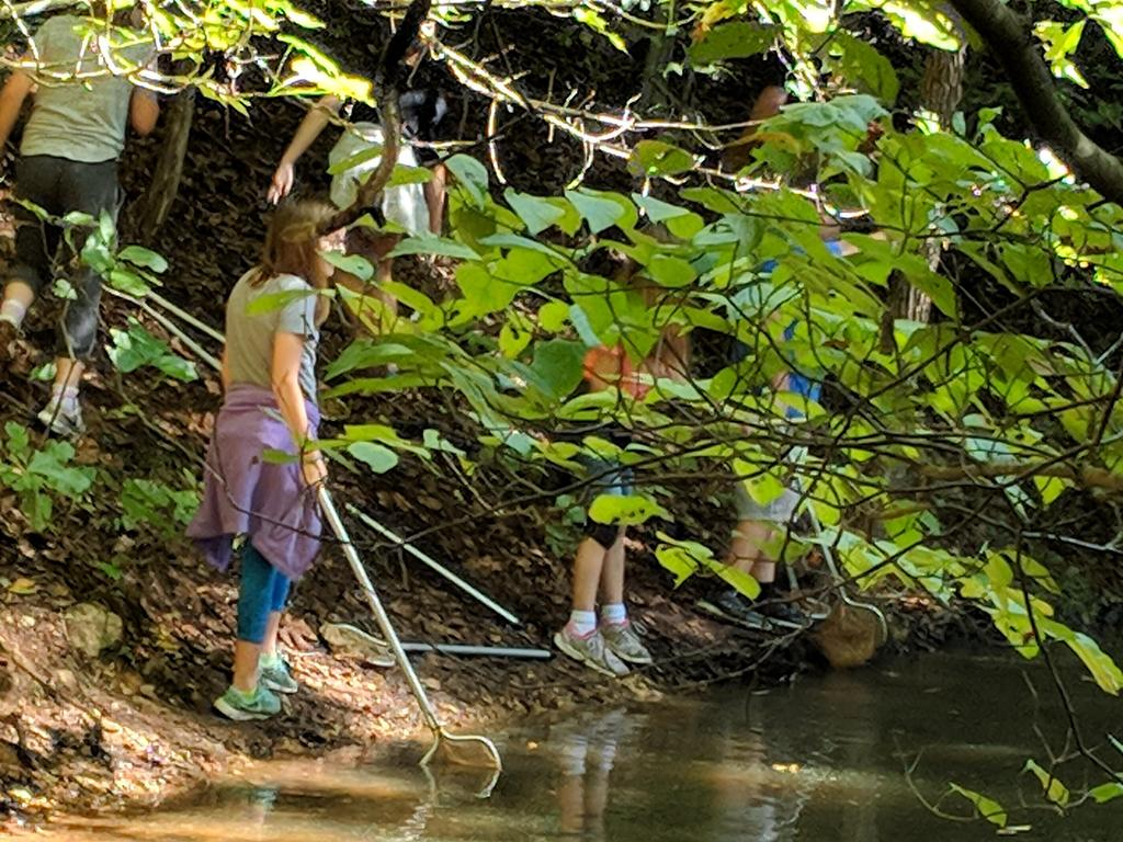 Students using nets at the pond study