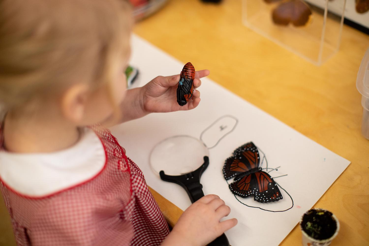 preschool student with magnifying glass and butterfly