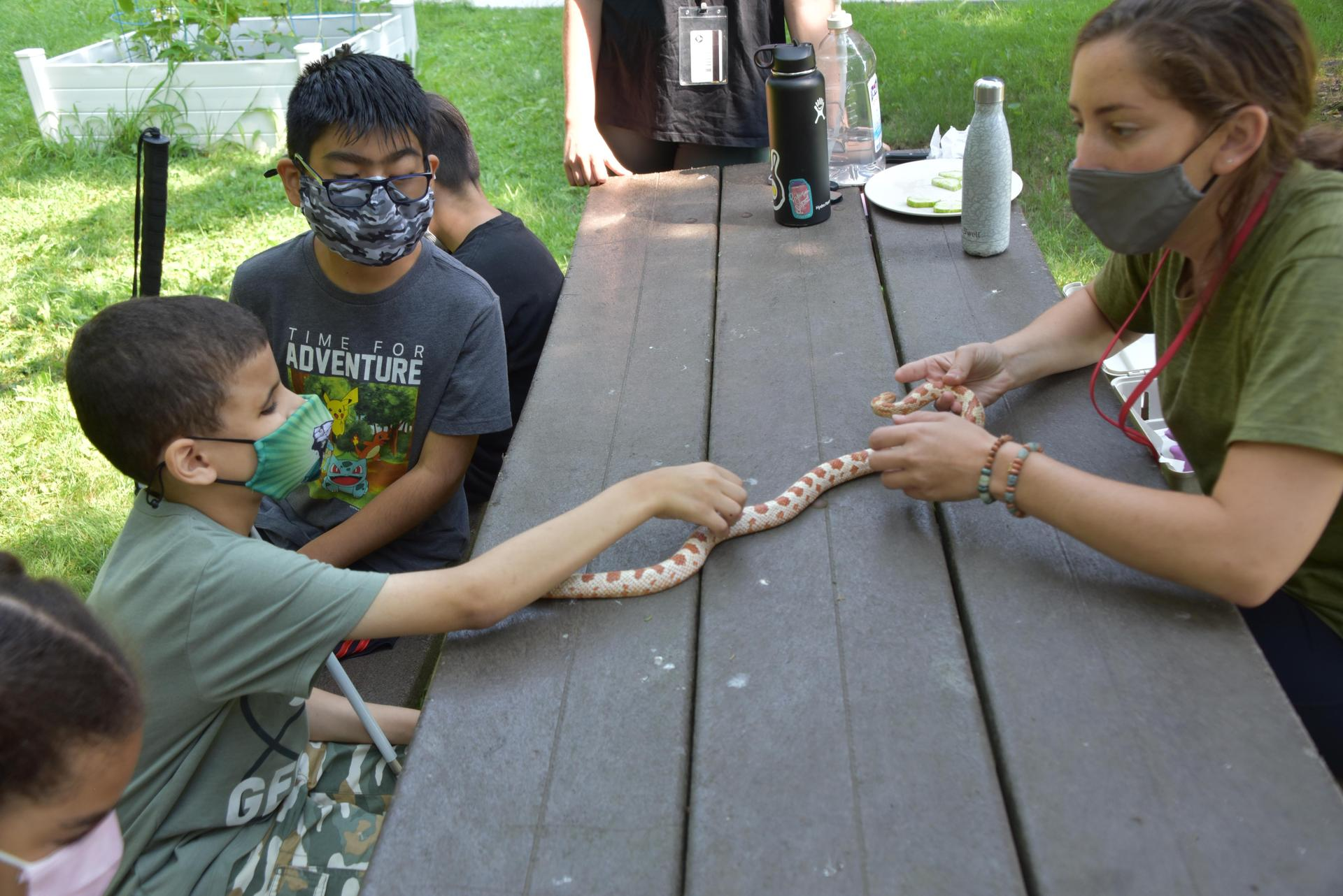 A teacher holds out a corn snake to a student as he puts his hand out to feel it.