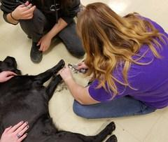 veterinary careers dog grooming