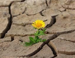 Flower growing from dried mud