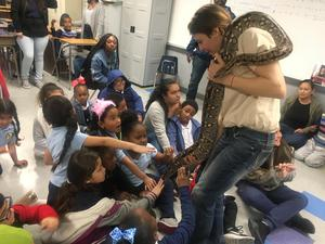 Students pet boa constrictor