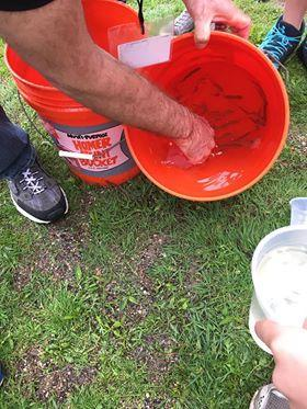 The bucket contains several salmon grown in the classroom.