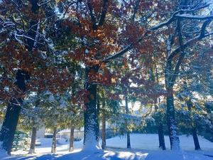 wintersingphoto.jpg