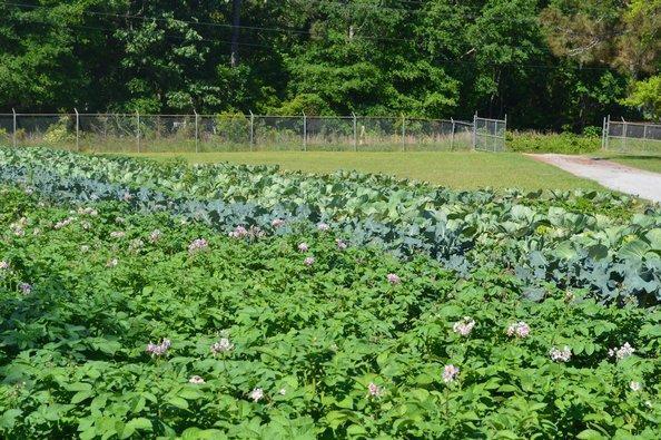 Fennell Elementary's Garden