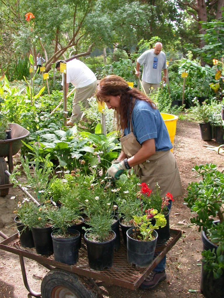 Landscaping   Career Technical Education