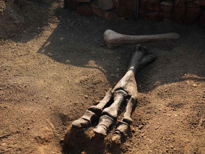 El INAH da a conocer micrositio sobre paleontología Featured Photo