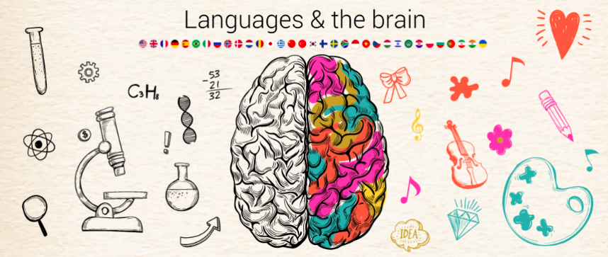 languages of the brain