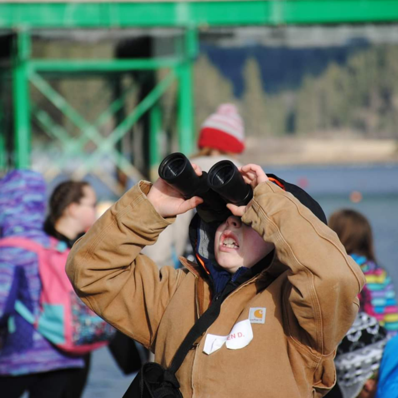 Student watching an eagle fly