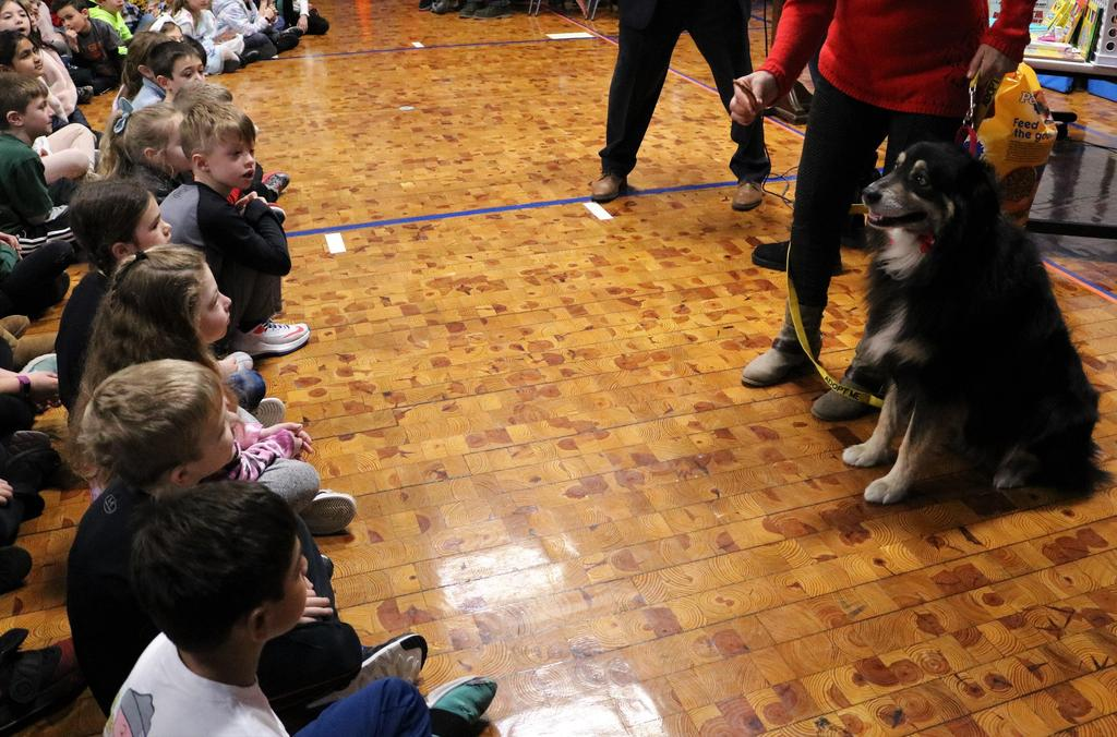Photo of Razor, one of the dog residents of an animal shelter recipient of donations collected during Wilson's Month of Hope.  with students looking on.
