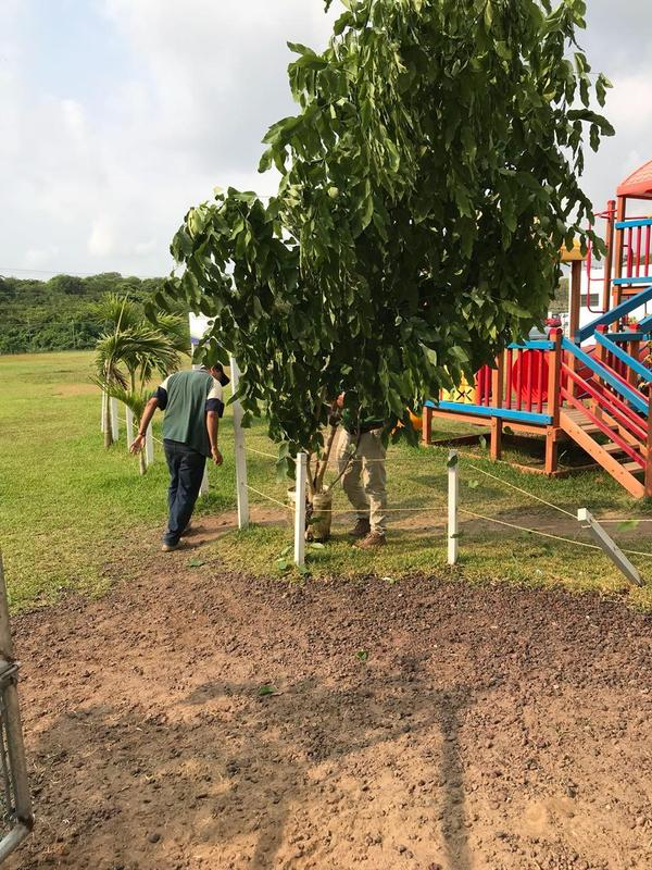 Reforestación del Campus La Condesa Featured Photo
