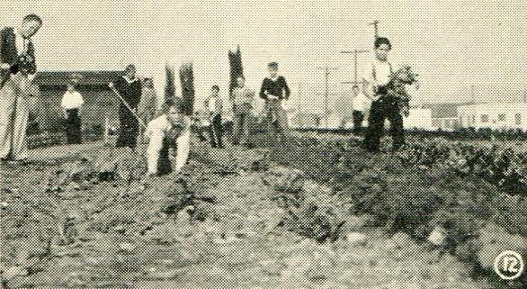 Students working in the agriculture field (1932)