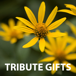photo of yellow flowers with text tribute gifts