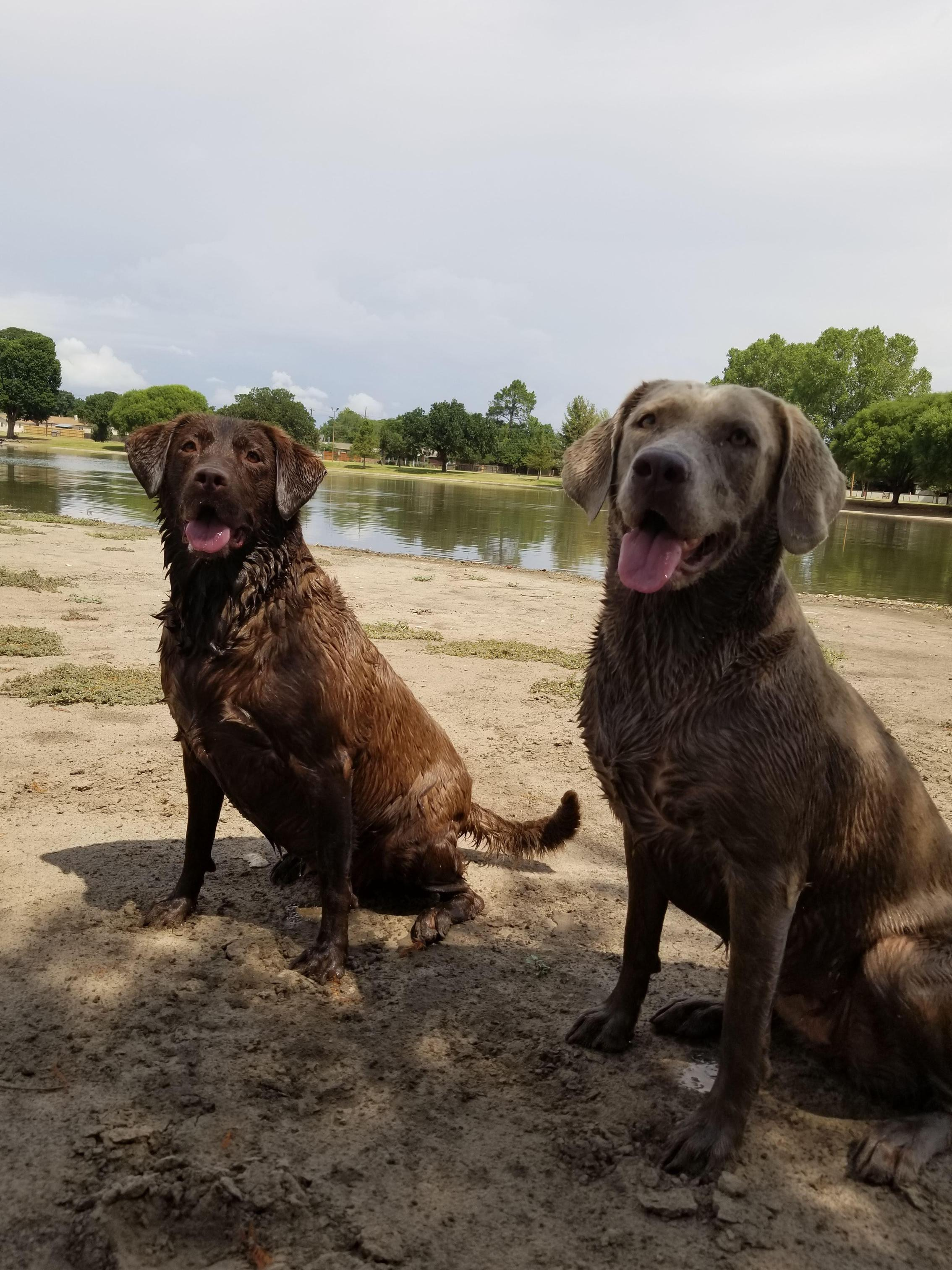 I have two dogs, Sadie and Khaleesi who I love taking to swim on the weekends.