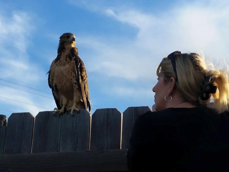 Ms. W talking to a hawk