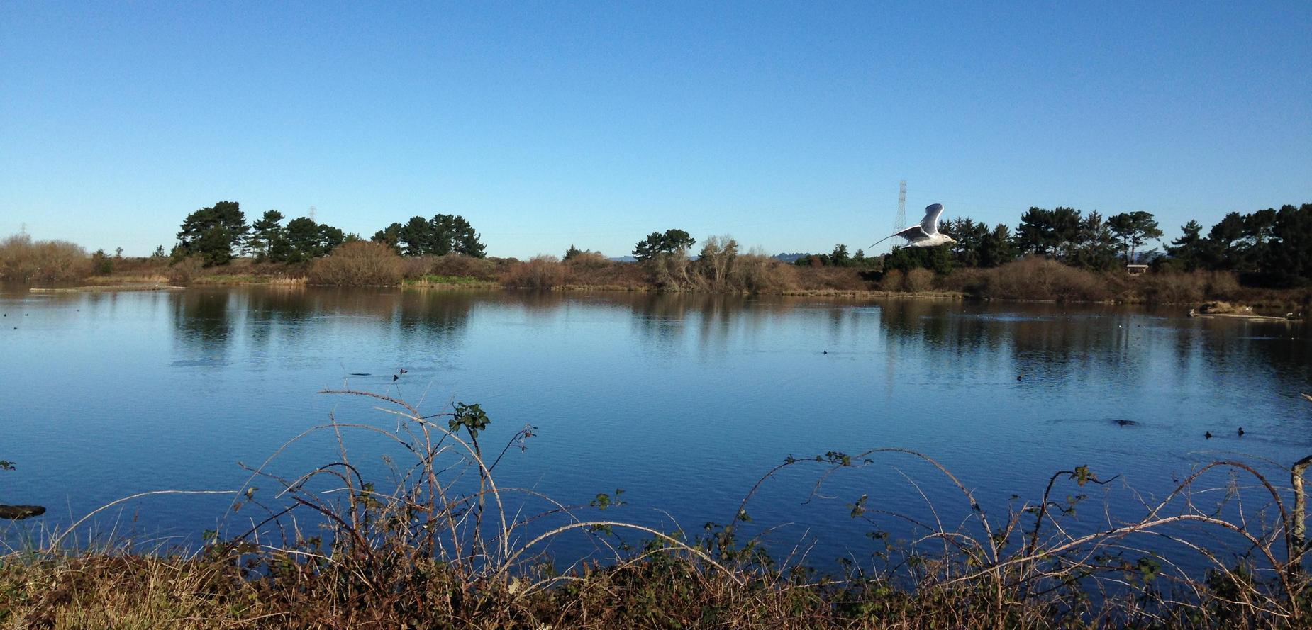 pond at Arcata Marsh