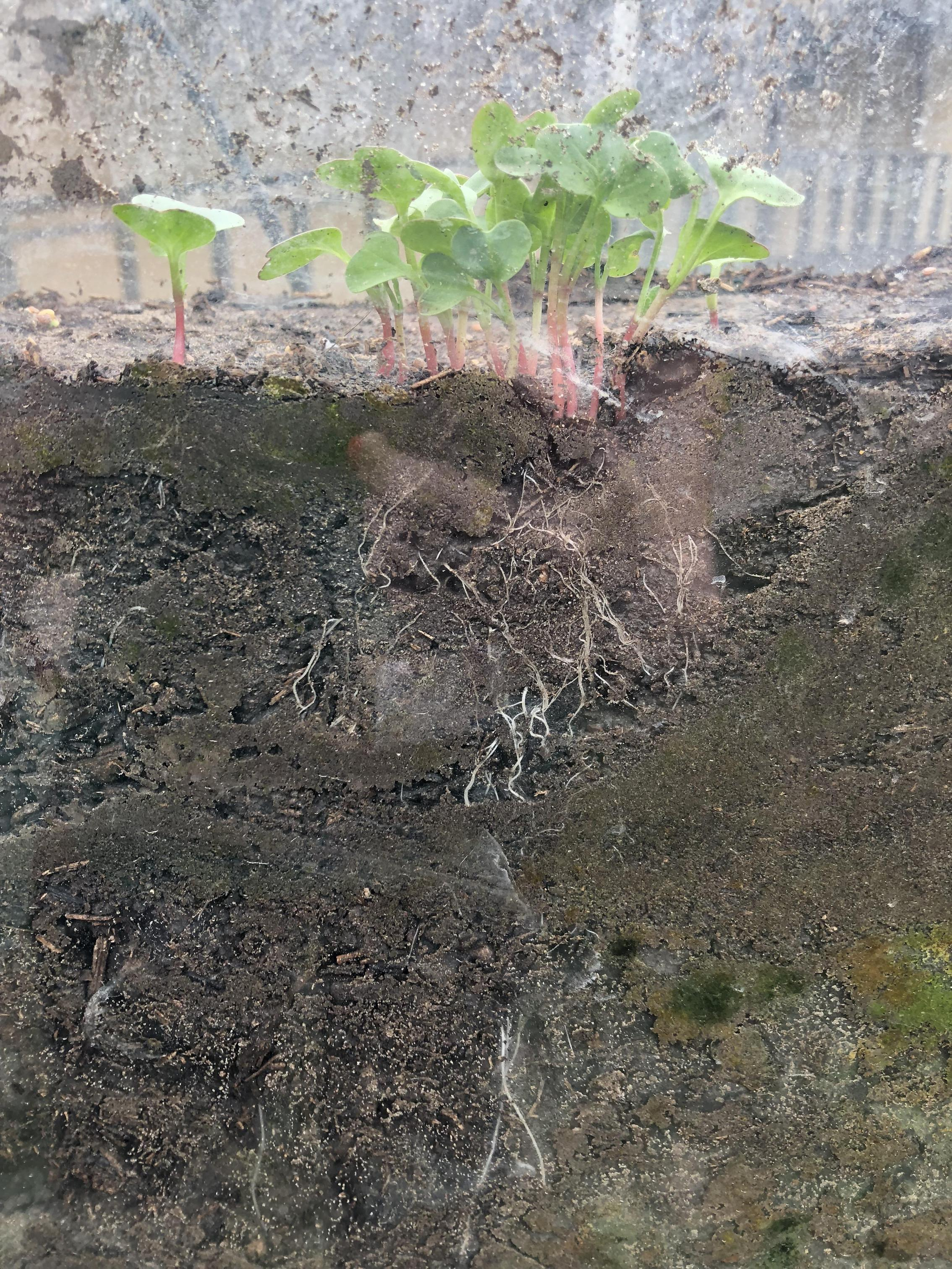 Root View
