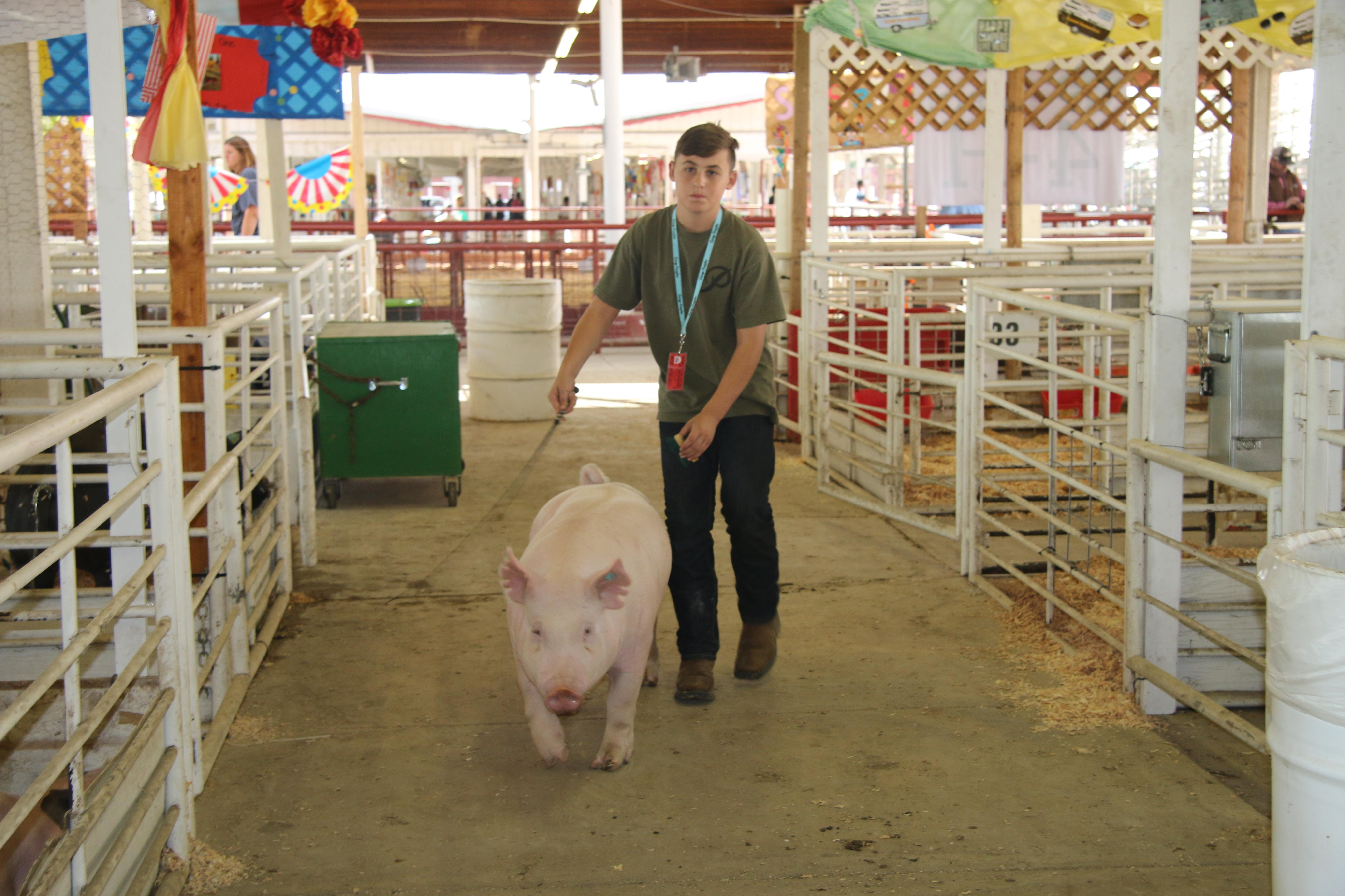 Frontier student with swine project