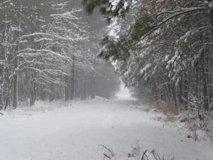 snow path.jpg