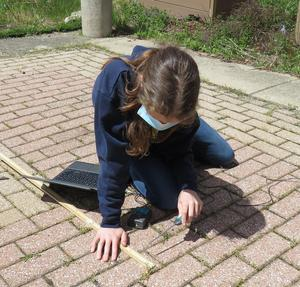 A student uses the temperature probe to collect data from the brick ground covering.