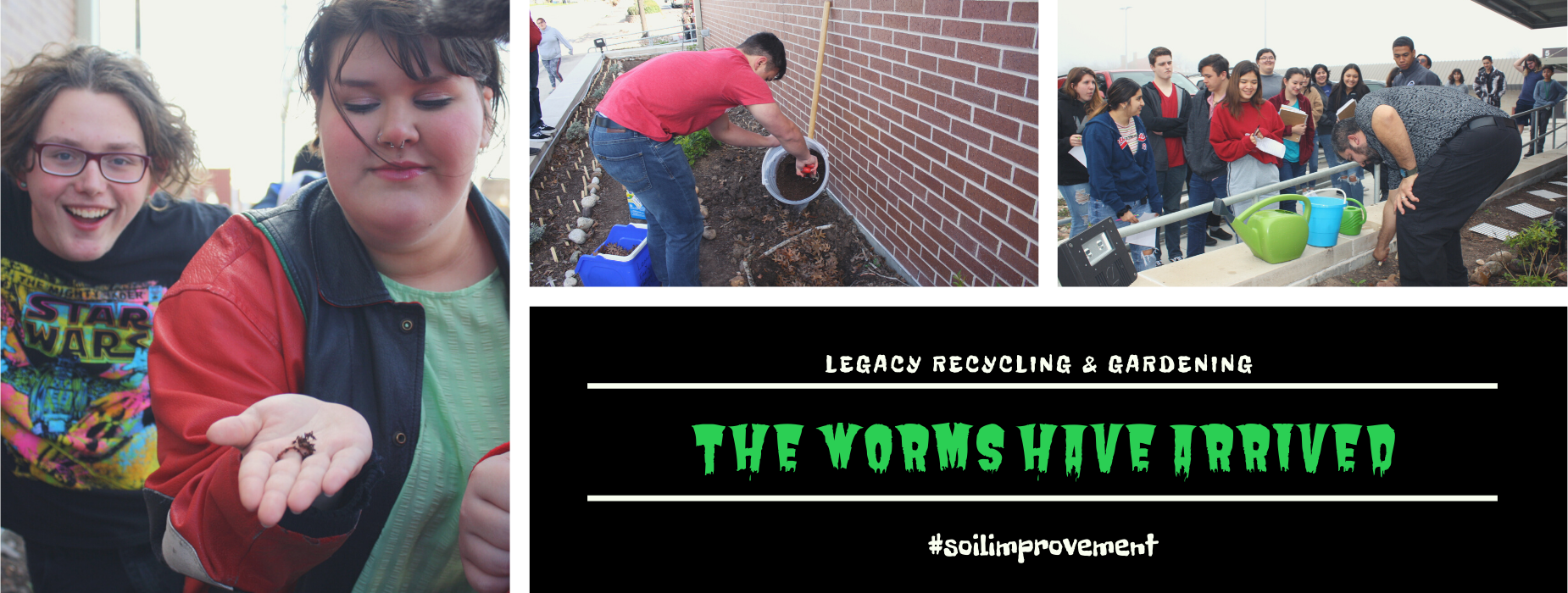 Worms added to Legacy garden to improve soil