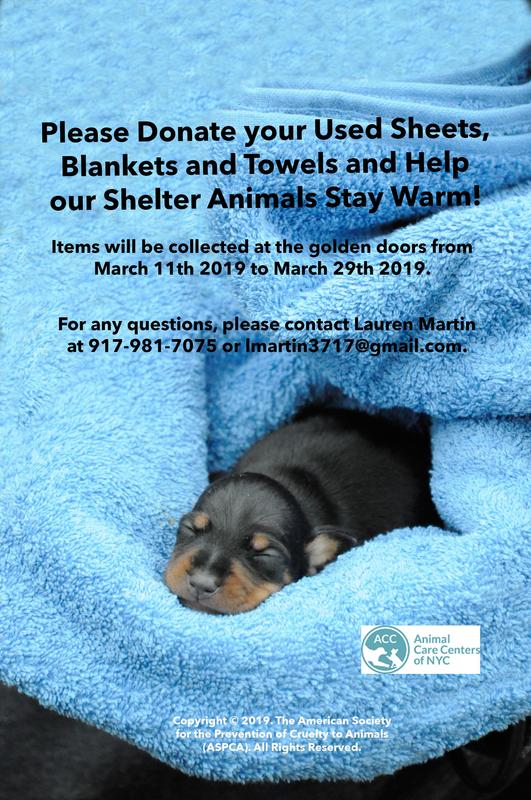 2019 Shelter Animal Blanket and Towel Drive Featured Photo