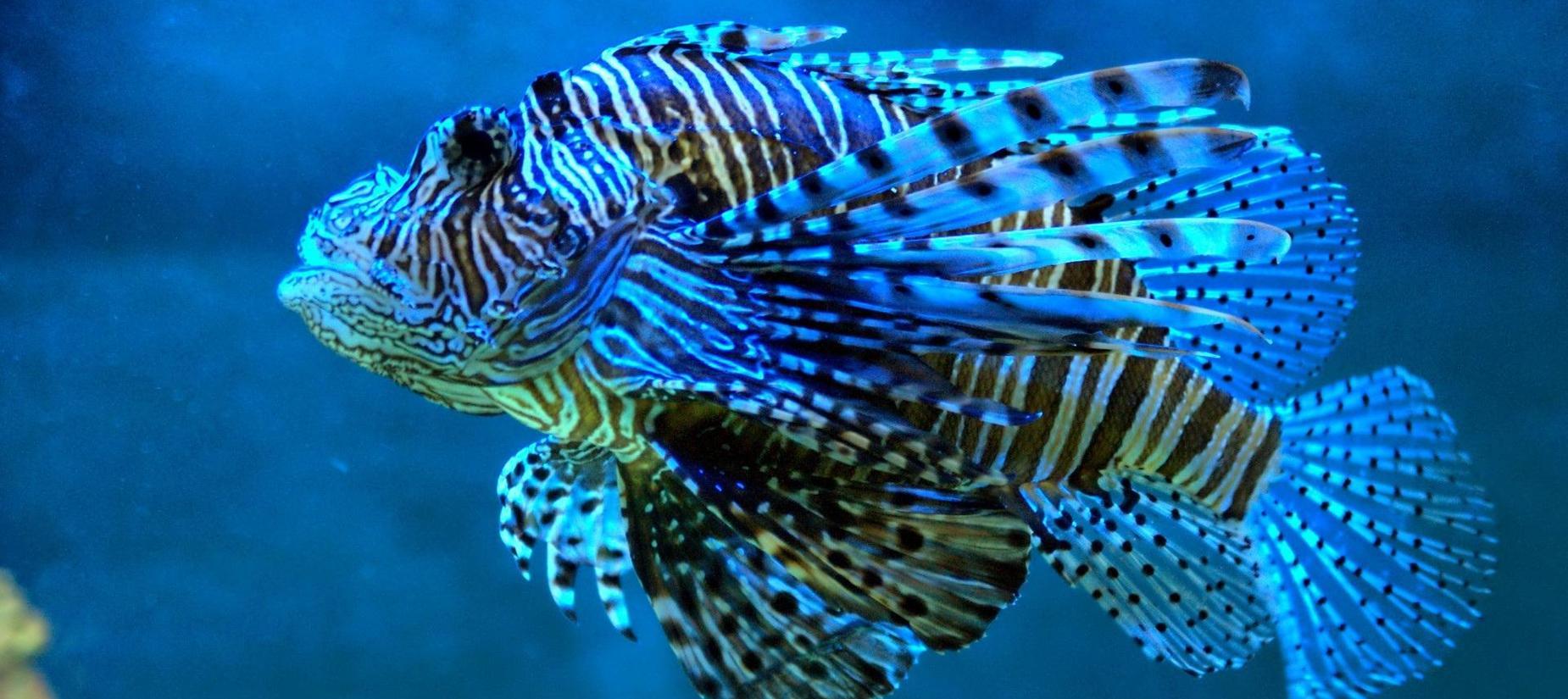 Blue ocean coral fish