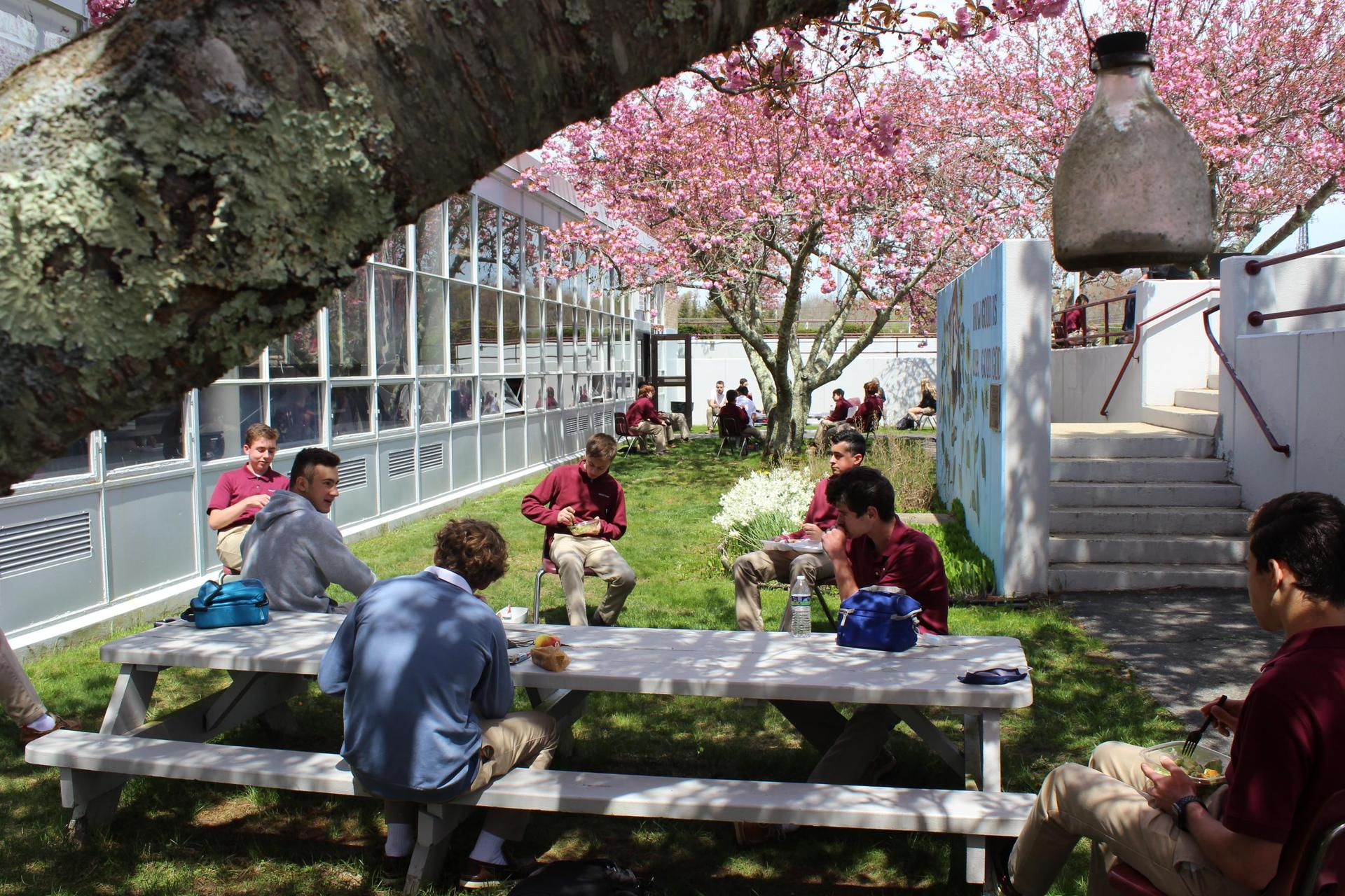 students dining outdoors under blooming trees