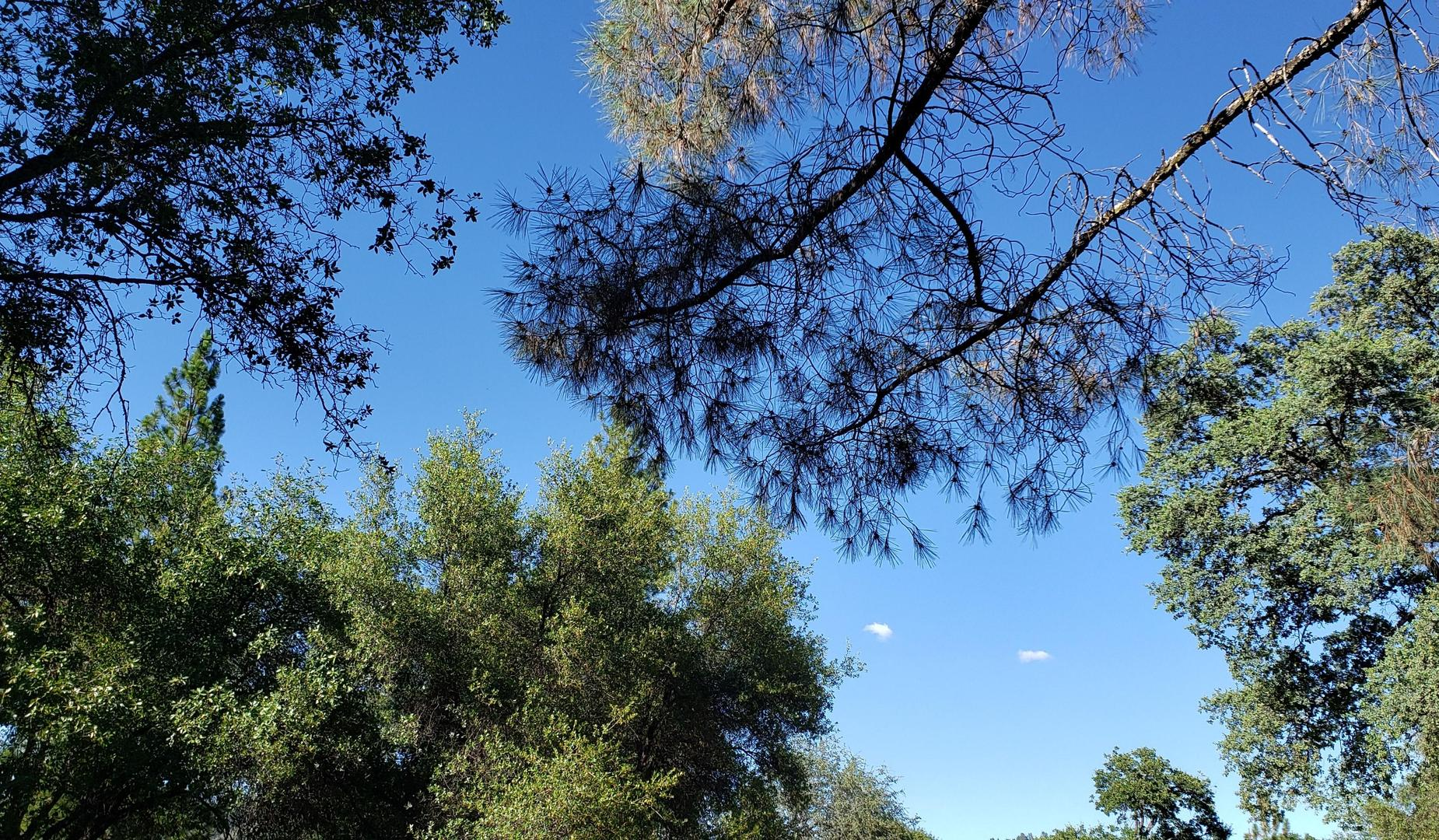 Murphys sky through the trees