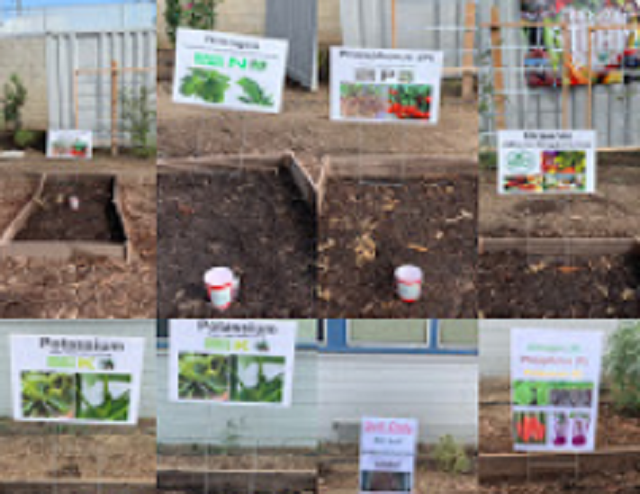New vegetable project for 2019-2020!