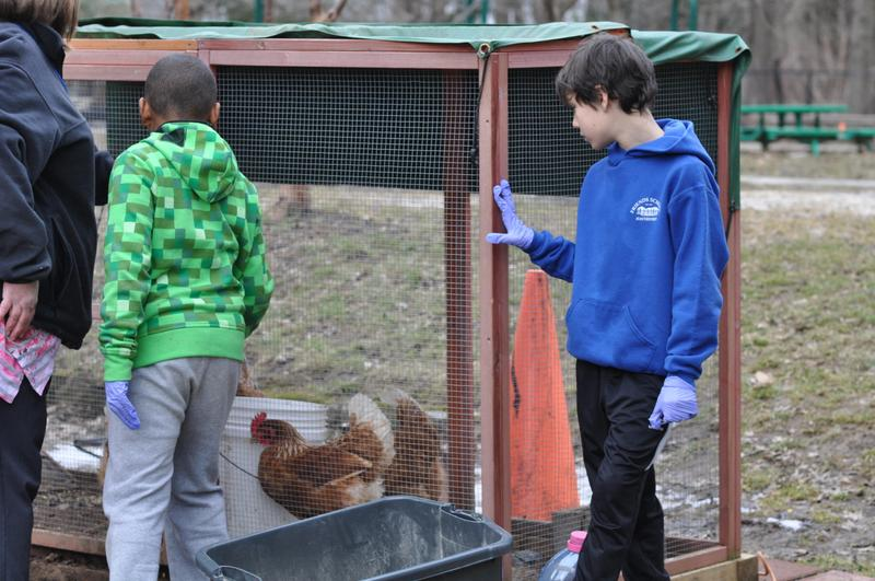 Taking Care of the Chickens Featured Photo