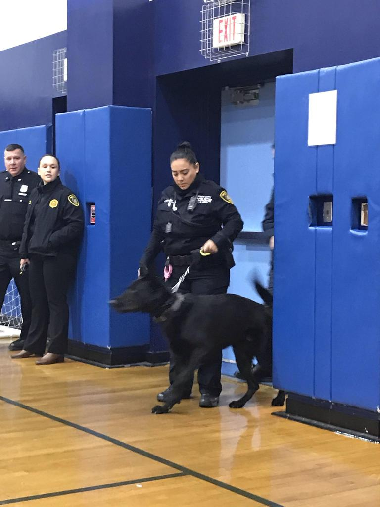 female police officer leading another police dogs