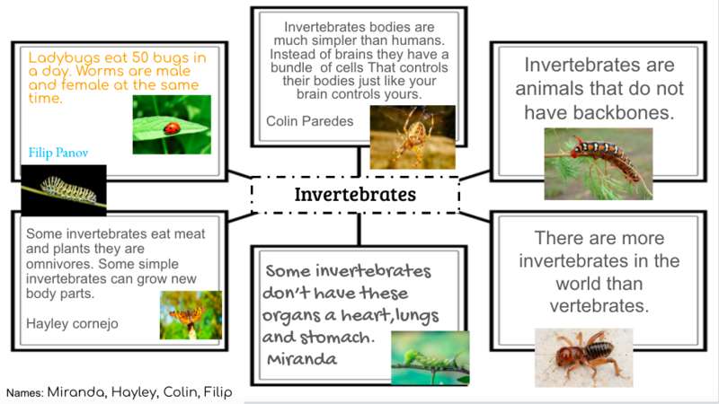 Invertebrates animal group facts