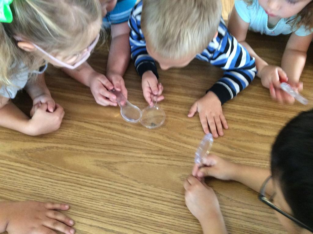 children looking at bugs