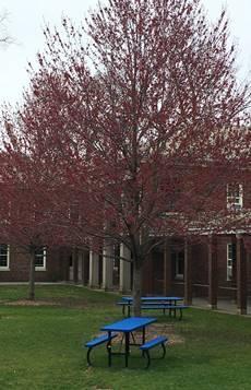 Blooming tree near Wood-Russ