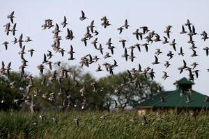 INVISTA Wetlands