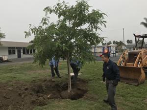 tree is in