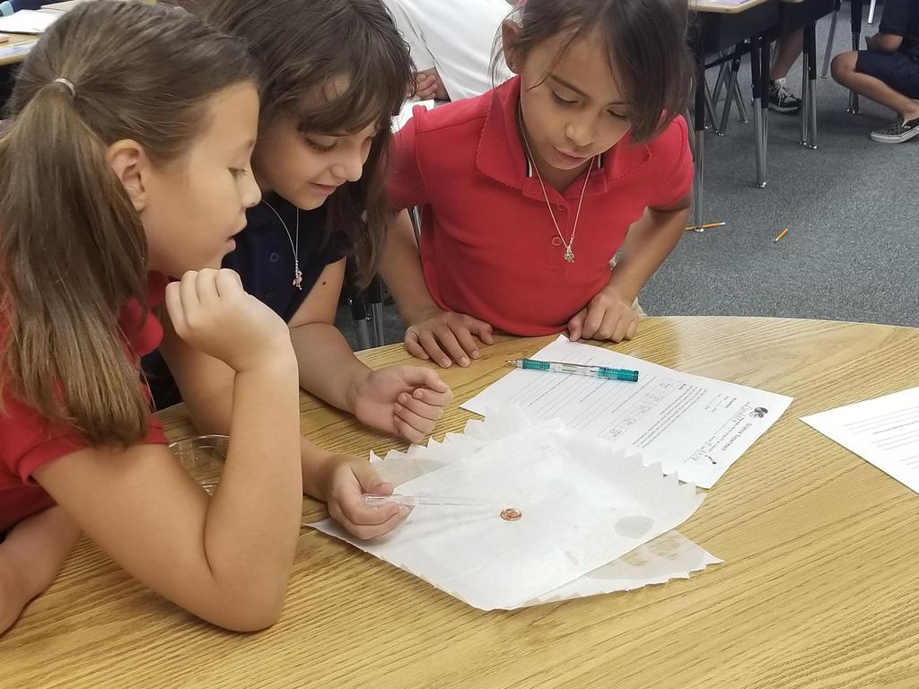 3rd Grade Science Experiment